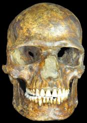 k14-skeleton